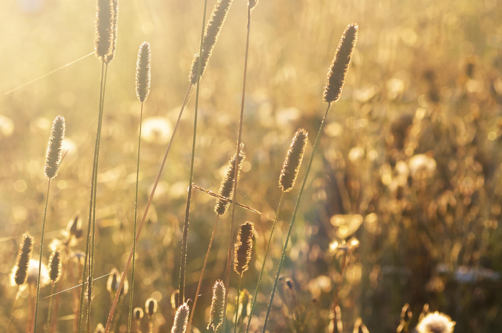 Warum eine hohe Bioverfügbarkeit so wichtig ist