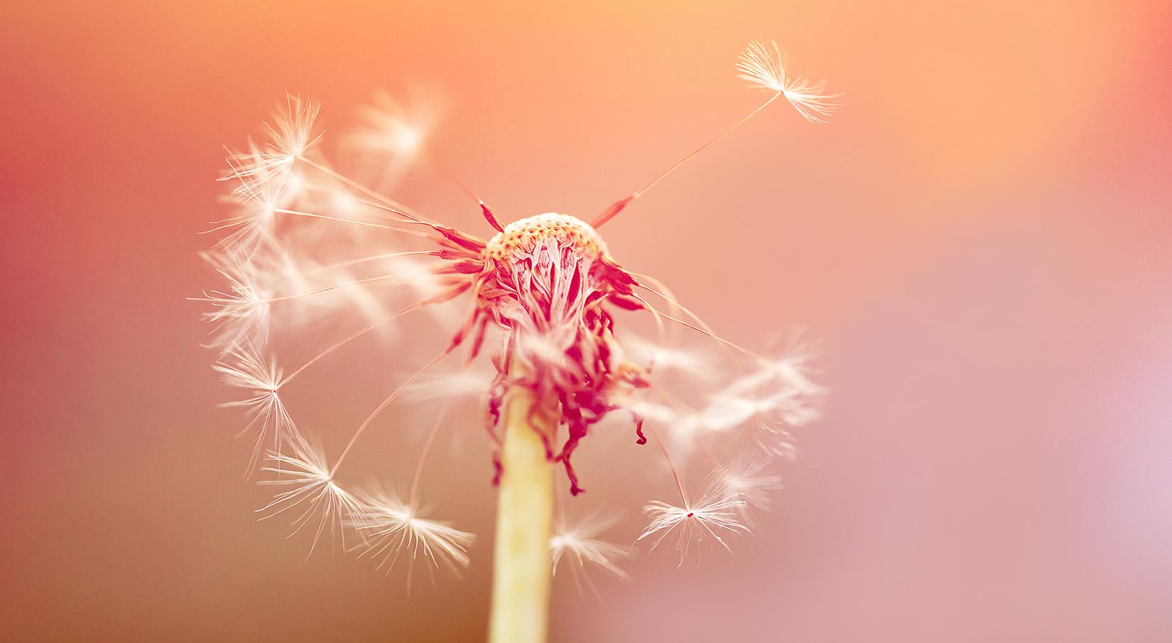 Pollenallergie: wie sie entsteht und was wirklich hilft